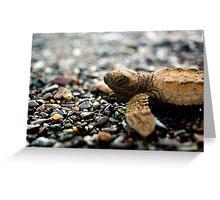 Baby Sea Turtle - Playa Hermosa Greeting Card