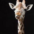 Cheeky Giraffe by hpelly31