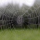 Morning dew on spider's web by hpelly31