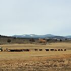 Cattle Country - Meals on Wheels by Betty E Duncan © Blue Mountain Blessings Photography