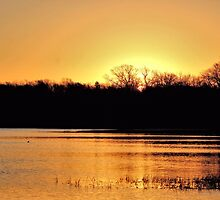Sunrise Over Lake Pickens by aprilann