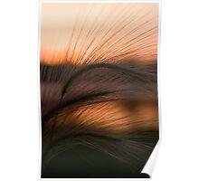 Grass Sunset Poster