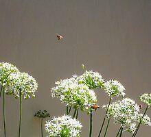 Bees - 16 03 13 - Seven by Robert Phillips