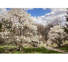 Magnolia Walk Photographic Print