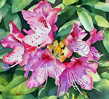 Pink Rhododendrons by Ann Mortimer