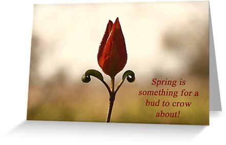 Spring is something for a bud to crow about. by Thomas Murphy
