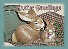 Easter Greetings - Bunnies by MotherNature