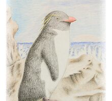 Rockhopper Penguin by jkartlife
