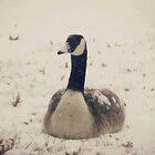 Snow Goose by Lisa McIntyre