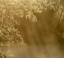 17.3.2013: Frosty Branches by Petri Volanen