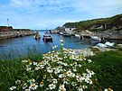 Ballintoy Harbour, Co Antrim, Northern Ireland by Ludwig Wagner