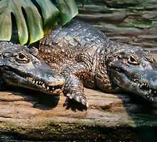 See You Later Alligator by AnnDixon
