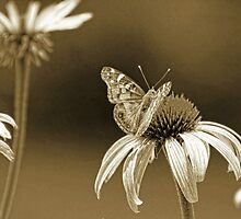 *Gossamer Wings* by DeeZ (D L Honeycutt)