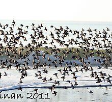 BIRDS! by KarenDinan
