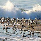 A Splash of Birds by KarenDinan