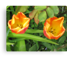 Tulips 2 Toned Red Yellow Canvas Print