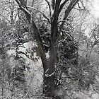 Winter Tree by Jennifer Totten