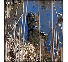 Ten Turtles Sunning Photographic Print