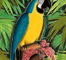 Gold and Blue Macaw by jkartlife