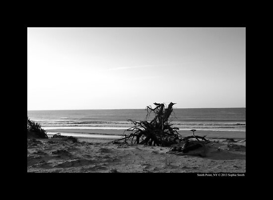 Uprooted Tree - Smith Point Country Park Beach - Fire Island, New York by © Sophie W. Smith