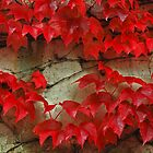 Red Ivy -- September in Tirol by PeachPark