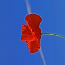 The Poppy & The Con Trail by Barrie Woodward