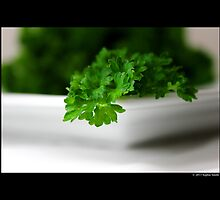Petroselinum Crispum - Fresh Organic Garden Parsley by © Sophie W. Smith