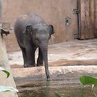 Baby elephant by Caroline Clarkson
