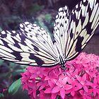 butterfly rainforest by sparkleshine
