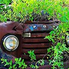 Truck in the bush by joevoz