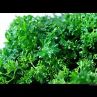 Petroselinum Crispum - Organic Garden Parsley by © Sophie W. Smith