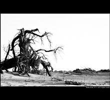Uprooted Tree At The Beach - Smith Point Country Park, New York by © Sophie W. Smith