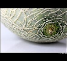 Cucumis Melo var. Cantalupensis - Cantaloupe by © Sophie W. Smith
