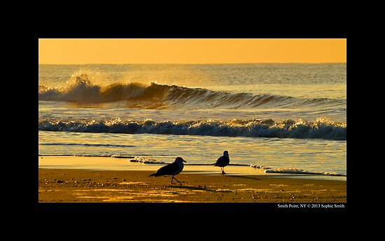 Seagulls By The Morning Sea - Smith Point, New York  by © Sophie W. Smith