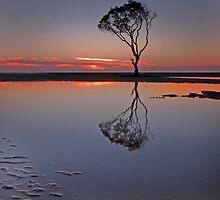 Beachmere Beauty - Qld Australia by Beth  Wode