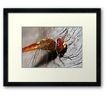 Red/Golden Dragonfly Framed Print