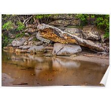 Reflections of nature Poster