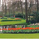 Spring at the Keukenhof by Imagery