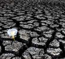 Dried up River Bed and flower by pictureguy