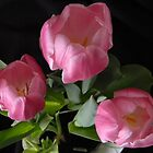 Pink Tulips  by Debbie Oppermann