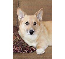 Kabo On His Pretty Sofa ~ Photographic Print
