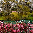 Mepkin Abbey - Azaleas by photosan