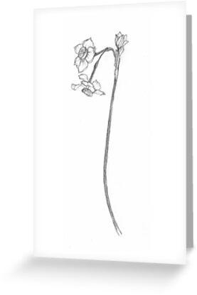 China Lily by Barbara Wyeth
