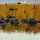 Fall Reflection  by debraroffo