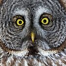 Great Gray Owl Detail by Bill McMullen