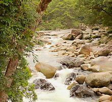 Mossman Gorge, Daintree Rainforest, Queensland Australia by Kathie Nichols