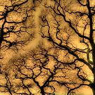 Trees against sky by maratshdey