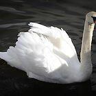Swan by emilyx93