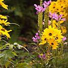 Fall Flowers by Jeanne Sheridan