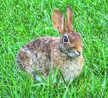 Cute Rabbit by James Brotherton